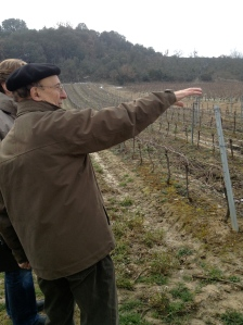 Some of the Mauzac vineyards of Dom. J. Laurens