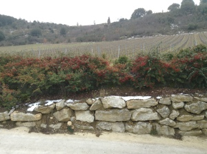 Some of the vineyard plantings of Domaine J. Laurens