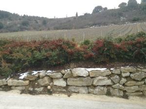 Some of the vineyard plantings of Domaine J. Laurens